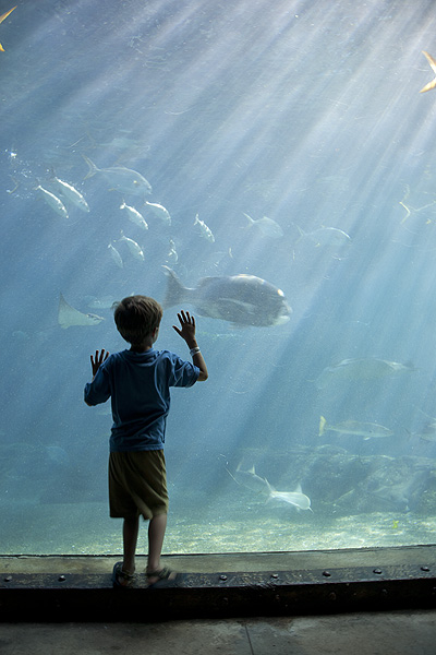 Fascination - a universal theme in a local context. A child at uShaka Marine World in Durban, South Africa. PHOTO: David A. Larsen